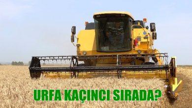 Photo of Türkiye'de 'ekmeklik buğday' üretilen iller açıklandı!