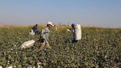 Photo of Çiftçinin Beklediği Açıklama Geldi: Destekleme Ödemeleri Başlıyor