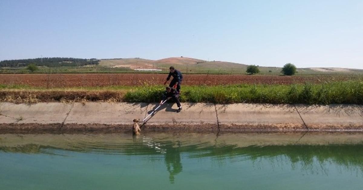 Şanlıurfa'nın Bozova ilçesinde sulama kanalına düşen köpek itfaiye ekiplerince kurtarıldı.