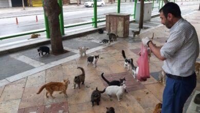 Photo of Urfa'da Aç Kalan Sokak Kedileri Bakın Nasıl Besleniyor