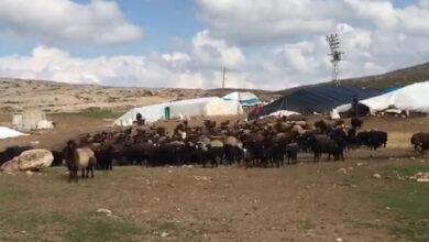 Photo of Göçerlerin Urfa'dan Çileli Göçü Başladı