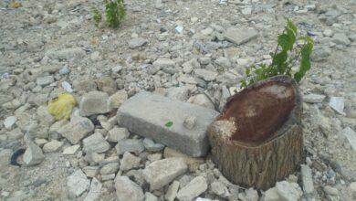 Photo of Urfa'daki Bu Ağaçları Kim Kesiyor?