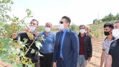 Photo of Urfalı Fıstık Üreticilerine Müjde, Zararları Karşılanacak