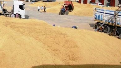 Photo of Urfa Buğday pazarlarında işler nasıl yürüyecek?