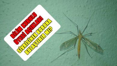 Photo of Bilim Kurulu Üyesi Açıkladı: Sivrisinekten Korona Bulaşır Mı?