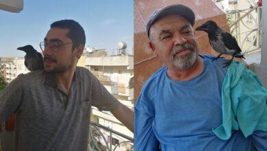 Photo of Urfalı Öğretmen Yavru Kargaya Babalık Ediyor