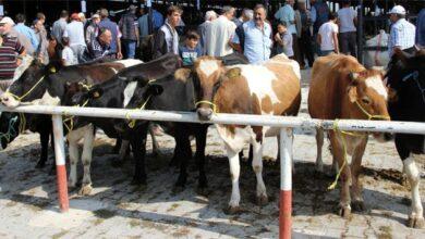 Photo of Valilik Açıkladı: Hayvan Pazarı Açılıyor