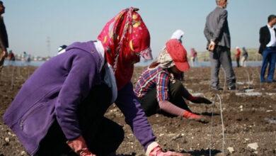 Photo of Urfalı Mevsimlik Tarım İşçileri Ölse de Yaranamıyor