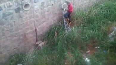 Photo of Tahliye Kanalına Düşen Yavru Köpekler Kurtarıldı