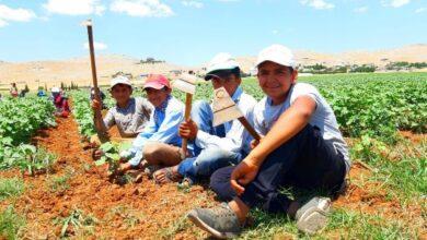 Photo of 50 Derece Sıcaklıkta 50 Liraya Çalışıyorlar