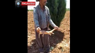 Photo of Urfalı Köylülerin Çöl Varanı İle İmtihanı