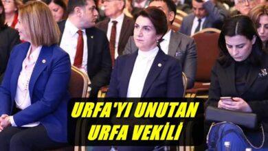 Photo of Açanal, Urfa'nın Vekili Olduğunu Unutunca İstanbul'a Takıldı