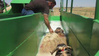 Photo of Mobil Koyun Banyolama Makineleri Hizmet Sunmaya Başladı