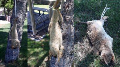 Photo of Şanlıurfa'da Caniliğin Böylesi! Köpeğe İşkence Edip Astılar