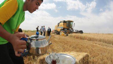 Photo of Suruç'ta Hububat Hasadı Başladı