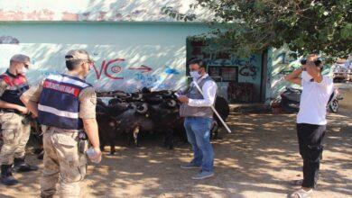 Photo of Şanlıurfa'da sosyal mesafeli kurbanlık satışı