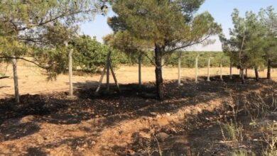 Photo of Sigara izmariti binlerce dönümlük araziyi yakacaktı