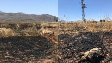Photo of Elektrik Teline Çarpan Karga, Buğday Tarlasını Küle Döndürdü
