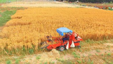 Photo of Urfalı Çiftçiler Dikkat! Sizin İçin Yeni Ürün Geliştirildi
