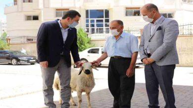 Photo of Şehit ailelerine kurbanlık koç