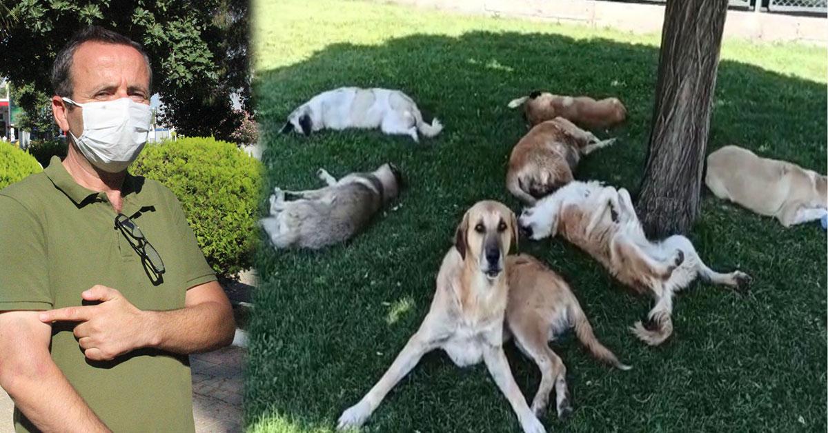 Şanlıurfa Köpek Saldırısı