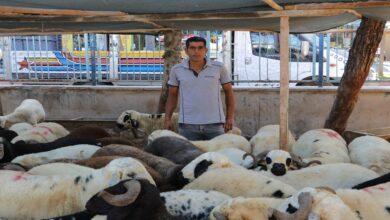 Photo of Korona virüs kurbanlık satışlarını etkiledi