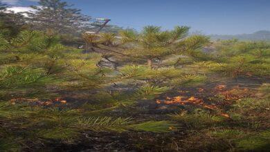 Photo of Devrilen elektrik direği ormanı yaktı
