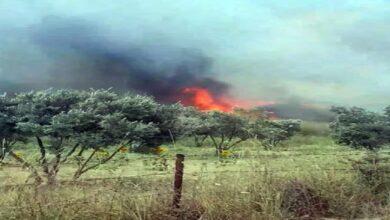 Photo of 100 dönüm zeytinlik alan cayır cayır yandı