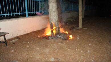 Photo of Alkollü şahıs okuldaki ağaçları ateşe verdi
