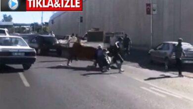 Photo of Urfa'da Kaçan boğa sahibini yol ortasında yere serdi