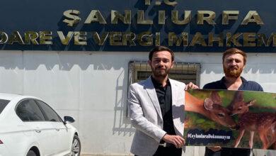 Photo of Mücadeleden Müjde Geldi! Urfa Ceylanları Öldürülmeyecek