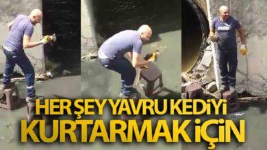 Photo of Herşey yavru kediyi kurtarmak için