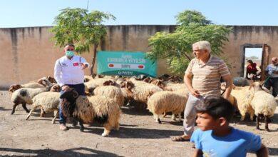 Photo of Hayırseverlerin bağışladığı kurbanlar ihtiyaç sahiplerine ulaştı