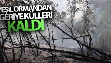 Photo of Yeşil ormandan geriye külleri kaldı