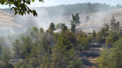 Photo of Halfeti'de Orman Yangını! 16 Saatte Söndürüldü