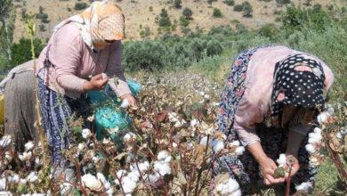Photo of Şanlıurfa da Artık İhtiyacı Karşılayamıyor! Türkiye İthal Edecek