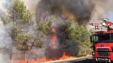 Photo of Ceylanpınar TİGEM'de Korkutan Yangın