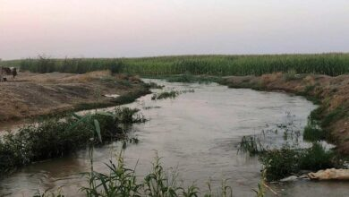 Photo of Suruç'ta 5 bin dönüm tarım arazisi sular altında kaldı