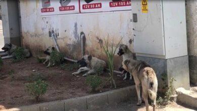 Photo of Urfa'da Sokak köpekleri vatandaşları tedirgin ediyor