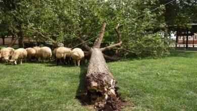 Photo of Urfa'da fırtına ağaçları kökünden söktü