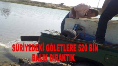 Photo of Türkiye Suriyelilerin geleceğini düşünüyor