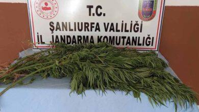 Photo of Urfa'da uyuşturucu operasyonu: 5 gözaltı