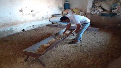 Photo of Urfa'da Tek geçim kaynağı olan hayvanları çalındı