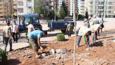 Photo of Haliliye'de parklar ağaçlandırılıyor