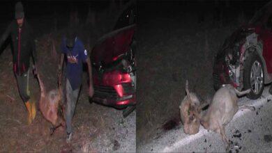 Photo of Otomobil sürüye daldı, çok sayıda koyun telef oldu