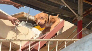 Photo of Pitbull operasyonu! Sahiplerine Binlerce Lira Ceza