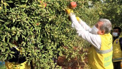Photo of Şanlıurfa'da dar gelirlilerin meyvesi belediyeden