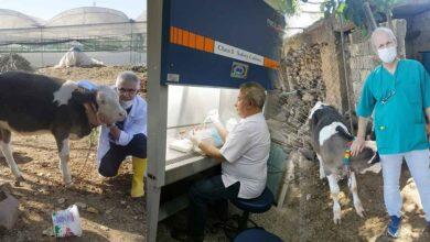 Photo of HRÜ Sığırlar İçin Aşı Üretmeye Başladı