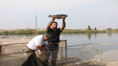 Photo of Karadeniz balığı Urfa'da