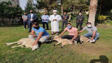 Photo of Bakan Soylu için Şanlıurfa'da 3 koyun kesildi